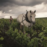 CLR_Horse_HighRes