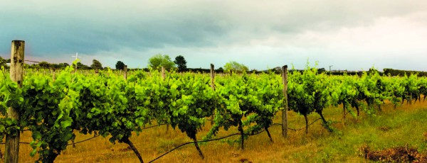 Weinparty-2015-Neuseeland-2-600x230